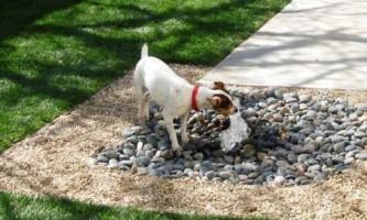 Ідеї для заднього двору: зробіть вашу собаку щасливою!