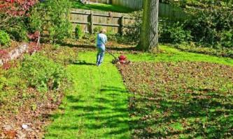 Як підготувати газон до зими