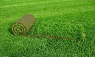 Рулонний газон: особливості укладання