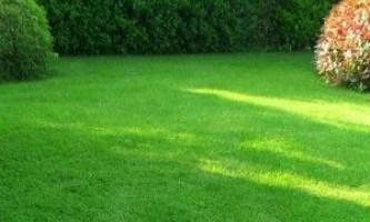 Сіяний газон - ідеально і швидко