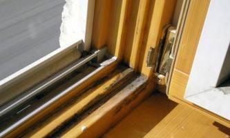 Обробка і захист деревини від грибка