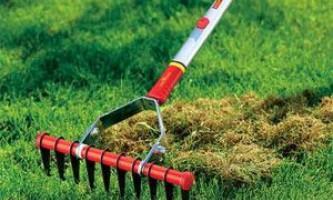 Догляд за дорослим газоном протягом року