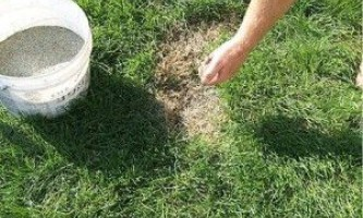 Ремонт і відновлення пошкоджених газонів